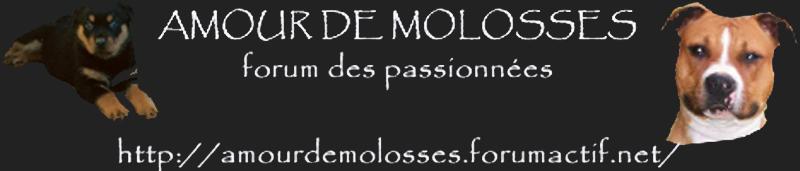 forum pour molosses
