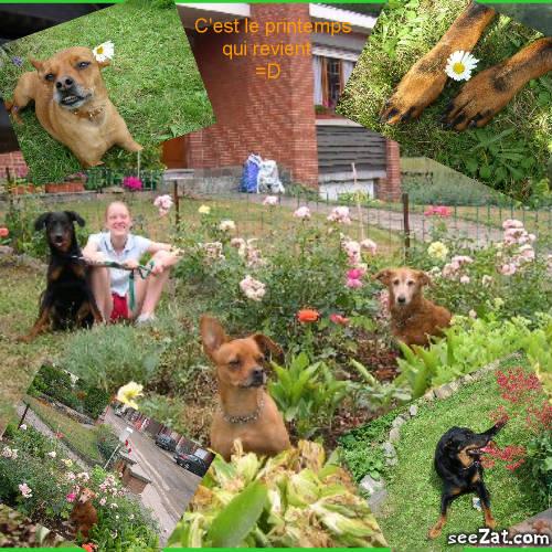 Nos Dogs et Nous! - Portail Montag10