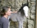 Une photo de vous et votre cheval - Page 3 Vanko_31