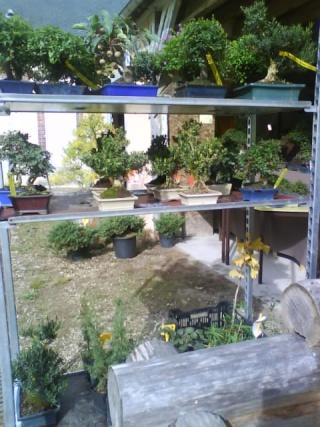 Un joli bonsaï pour Papy Dsc00725