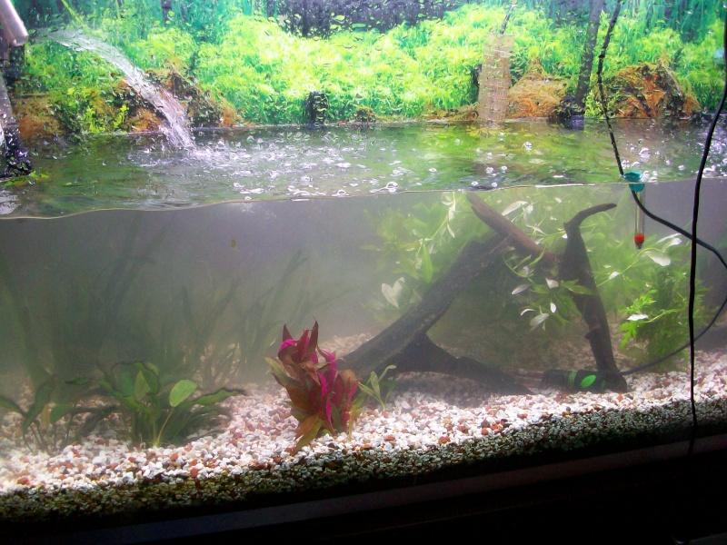 urgent aquarium qui va tomber chez la voisine 100_1911