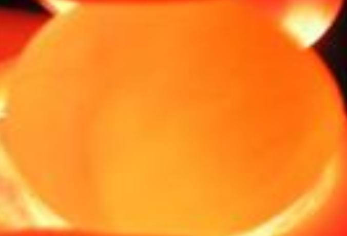 speratura delle uova di agapornis Uovovu10