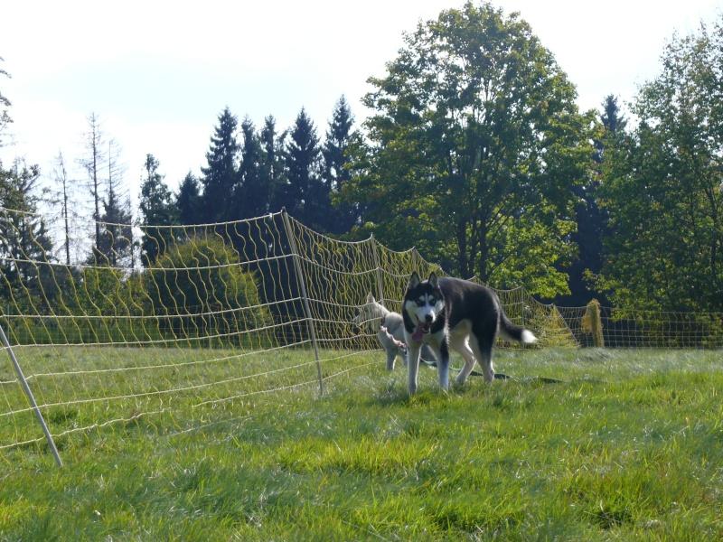 Nos loups grandissent, postez nous vos photos - Page 2 P1100811