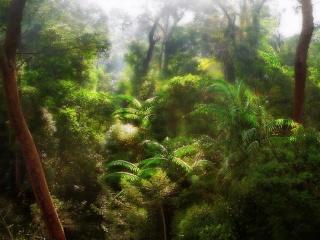Demande de partenariat ( membre & invités) Jungle11