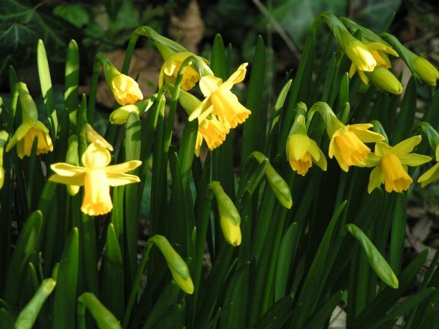 C'est l'printemps ! c'est l'printemps ! Pict4010