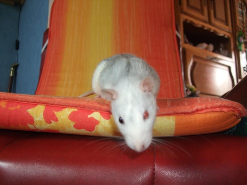 Une petite ratoune avec un oeil noir et un oeil rouge 2009_010