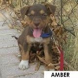 7 cachoritos buscando hogar... Amber10