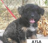 7 cachoritos buscando hogar... Ayla10
