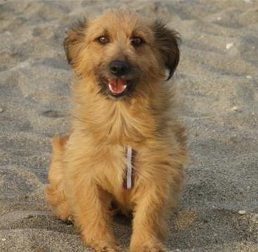 Daphne, preciosa cachorrita de apenas un año Daphne10