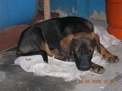 Perros en adopción por la muerte de su amo... Getat123