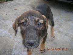 Perros en adopción por la muerte de su amo... Getat124