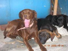 Perros en adopción por la muerte de su amo... Getat125