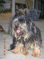 Perros en adopción por la muerte de su amo... Getat126