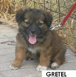 7 cachoritos buscando hogar... Gretel10