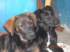 Perros en adopción por la muerte de su amo... Image015