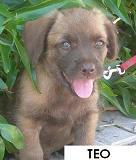 7 cachoritos buscando hogar... Teo10