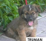 7 cachoritos buscando hogar... Truman11
