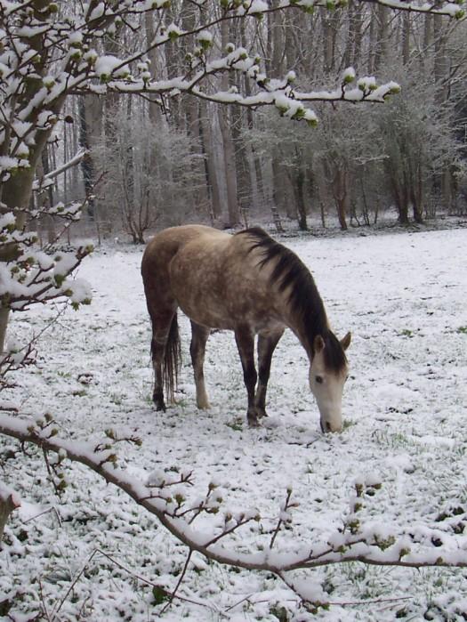Le cheval et la neige, gagnant : Chris - Page 3 M_895011