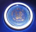 Jersey Pottery (Channel Islands) Jersey13