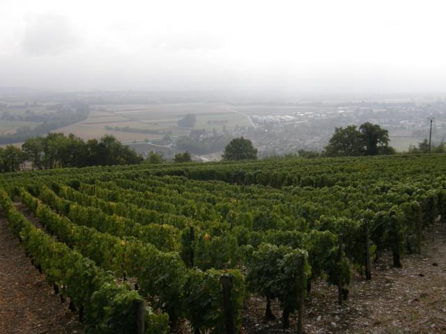 Foires aux vins P9210810