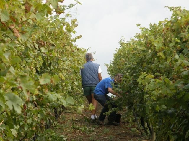 Foires aux vins P9210811