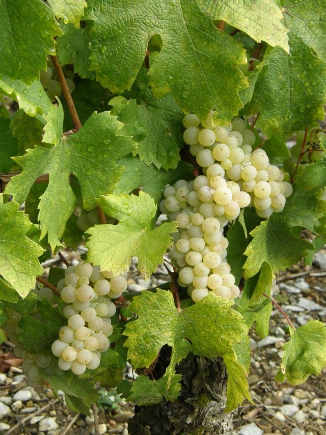 Foires aux vins Ph_cap10