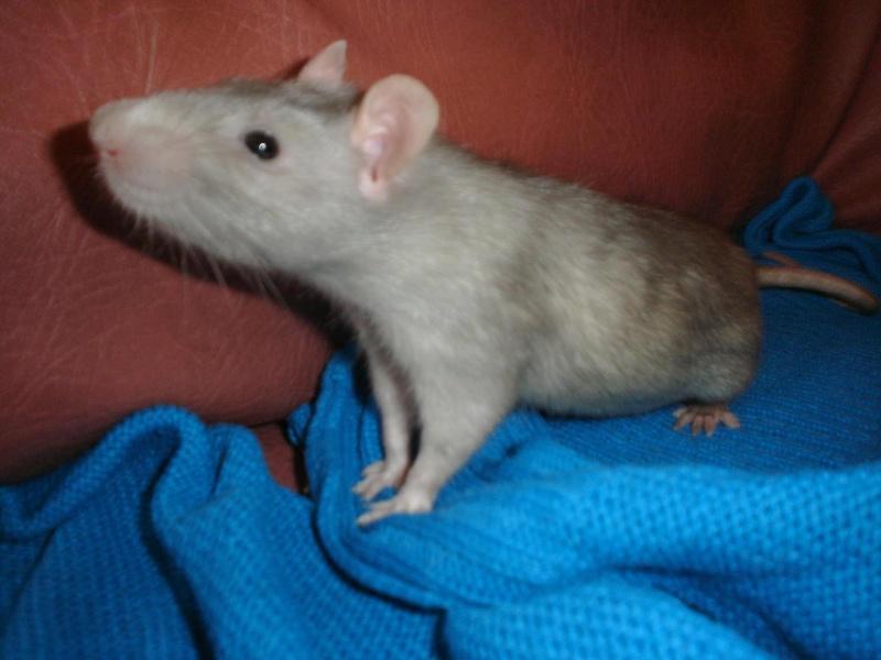 Mes ratounets et ratounettes... Dsc00616