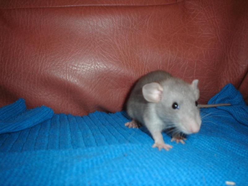Mes ratounets et ratounettes... Dsc00617
