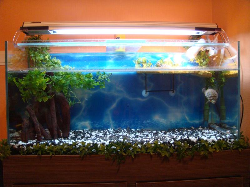photos d'aquariums Dsc03114