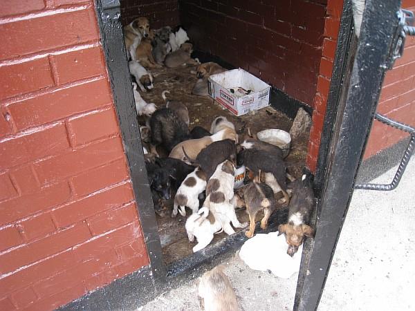 Доказательства убийства бездомных животных. Resize12