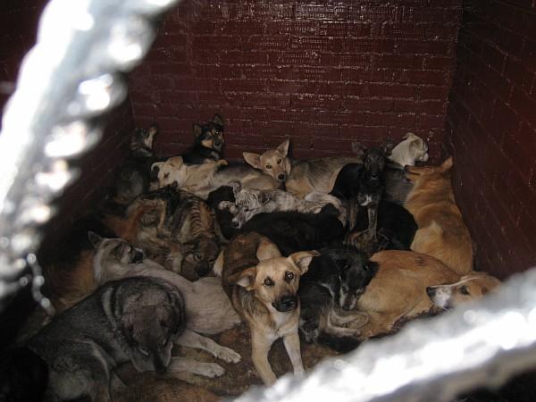 Доказательства убийства бездомных животных. Resize17