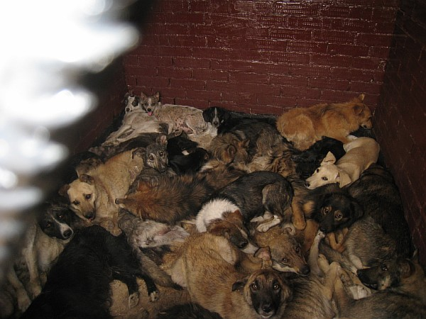 Доказательства убийства бездомных животных. Resize18