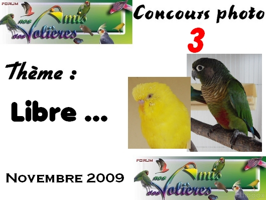 concours photo n°3 : Concou13