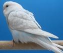 et voici les photos de mes oiseaux : Sdc12410