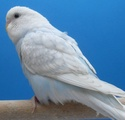 et voici les photos de mes oiseaux : Sdc12411