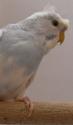 et voici les photos de mes oiseaux : Sdc12421