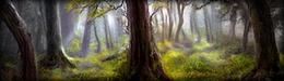 La météo Forest11