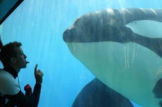[photo] Comparaisons  impressionnantes orques / humains - Page 5 35265610