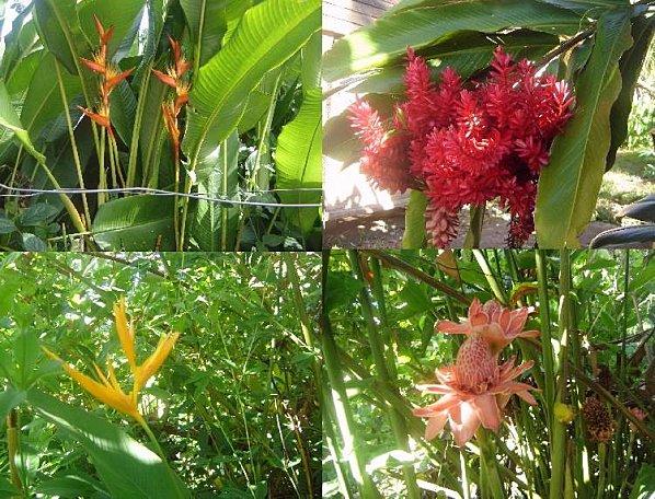 mes dernières fleurs d'automne Du_cot11