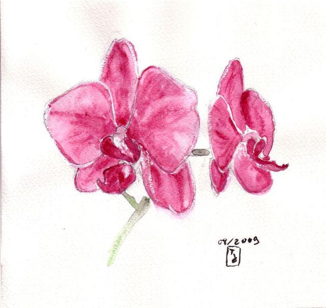 Orchidée Aquare11