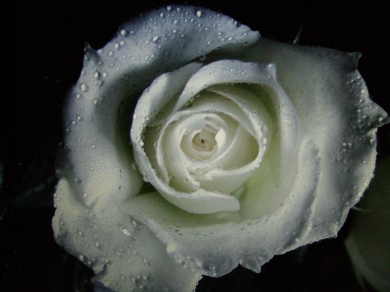 fleur, Photo110