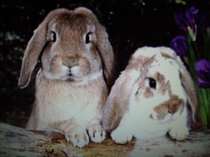 mimi,les lapins.... Photo_33