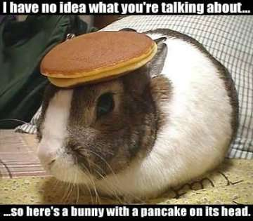 Breakfast Attendance Rabbit11