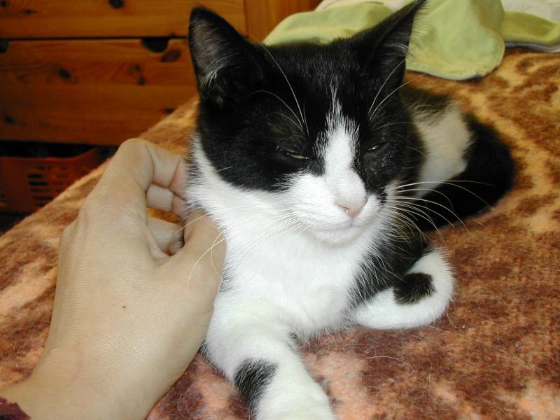 Azaro chaton M noir et blanc(35) Dscn8326