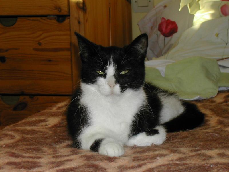 Azaro chaton M noir et blanc(35) Dscn8327
