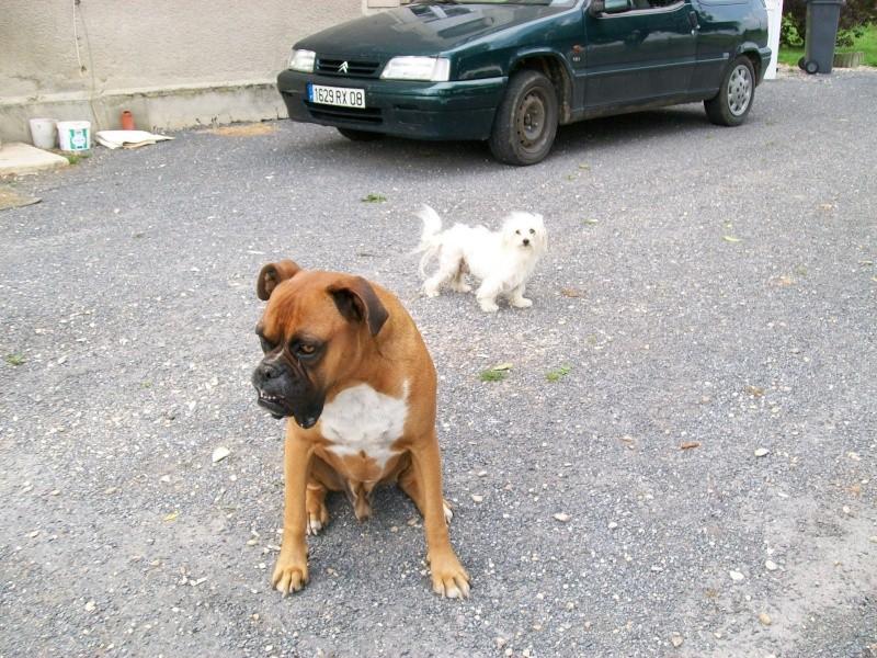 Quel est le croisement de mon chien ? - Page 2 301_0314