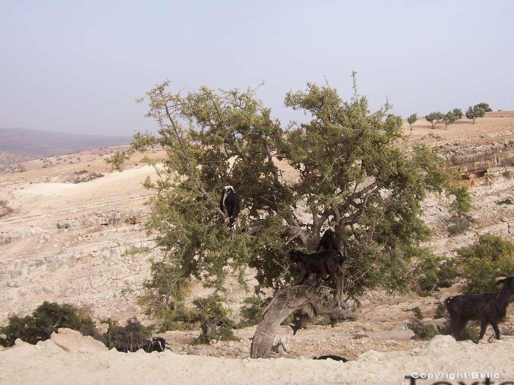 Tarifa ; essaouira; Tanger; 12ad_r10