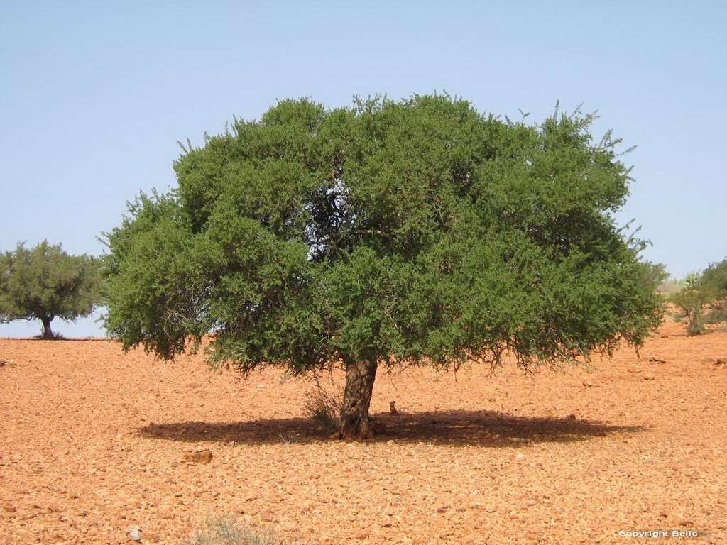 Tarifa ; essaouira; Tanger; 21_arg10