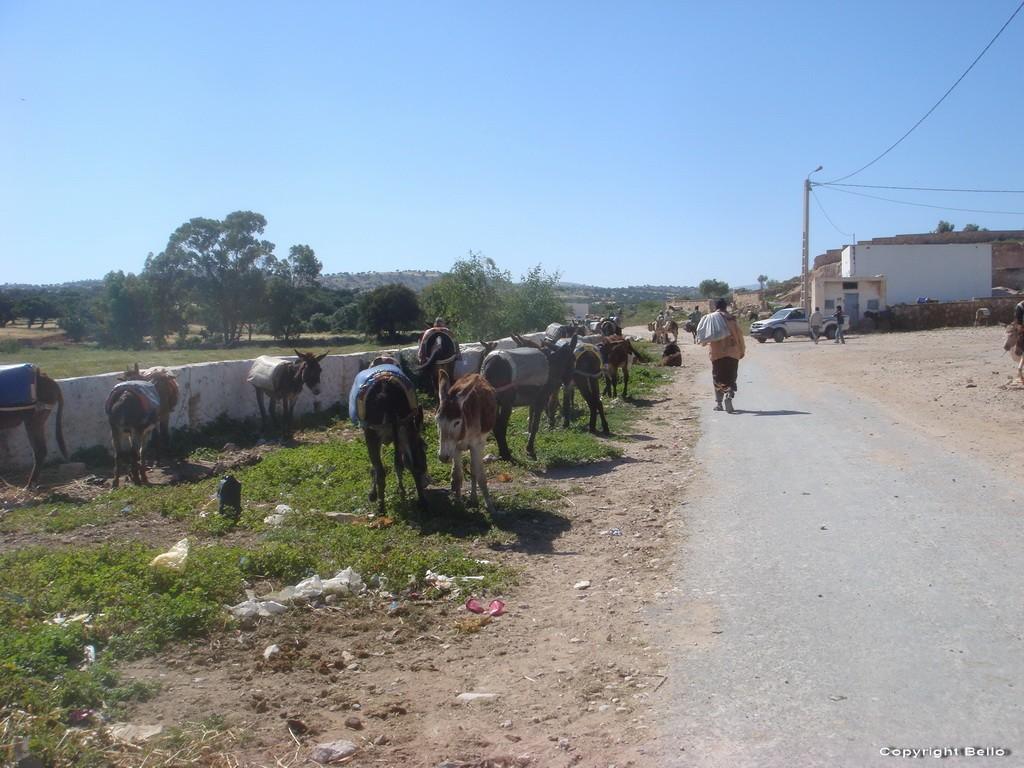 Tarifa ; essaouira; Tanger; 24a_pa11