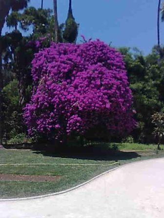 Photo d'arbre Bougai10